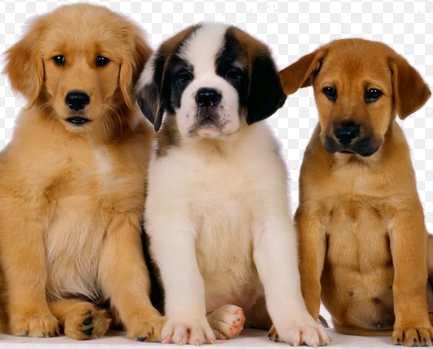 productos para perros tiendanimal