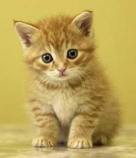 tiendanimal gatos
