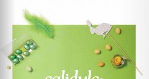 Catálogo Especial CALIDULCE